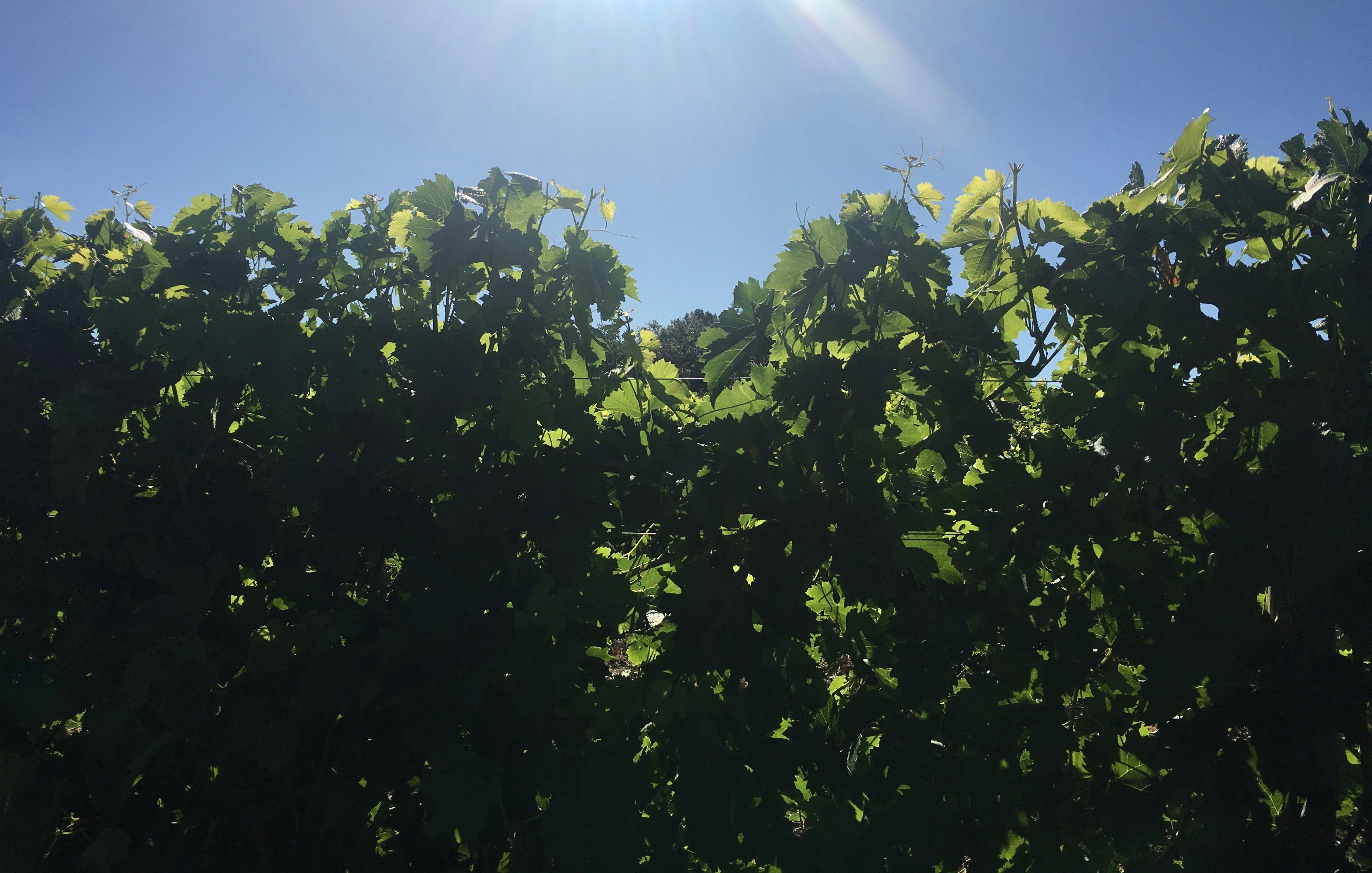 Bordeaux Fête le vin 2018, une belle occasion de se rencontrer!